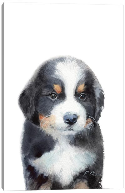 Bernese Mountain Dog Puppy Canvas Art Print