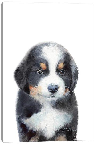 Bernese Mountain Dog Puppy Canvas Art Print