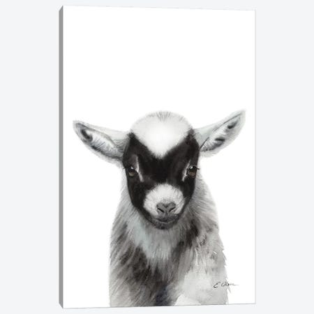 Black Baby Goat Canvas Print #WLU17} by Watercolor Luv Canvas Wall Art