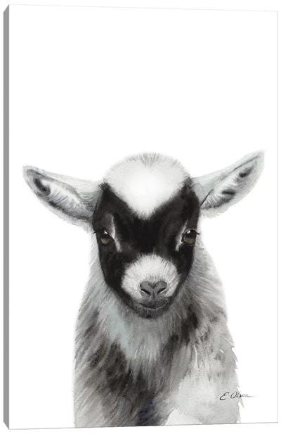 Black Baby Goat Canvas Art Print