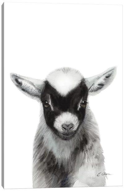 Black Baby Goat Canvas Art Print