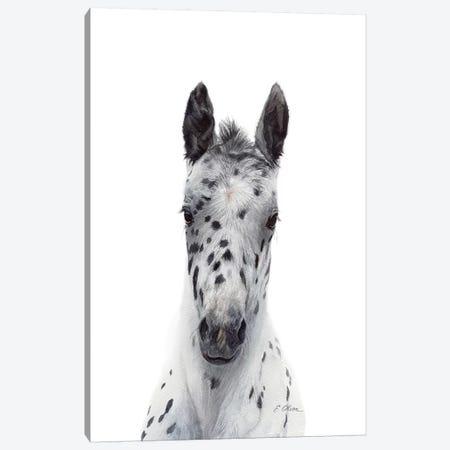 Appaloosa Foal Canvas Print #WLU1} by Watercolor Luv Canvas Art Print