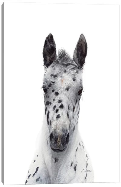 Appaloosa Foal Canvas Art Print