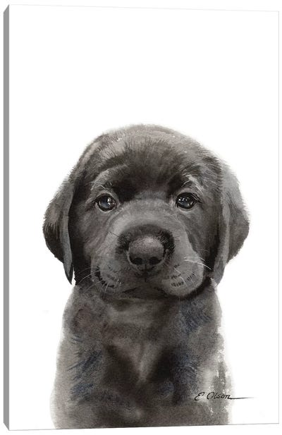 Black Lab Puppy II Canvas Art Print