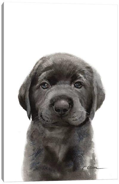 Black Lab Puppy II Canvas Art Print