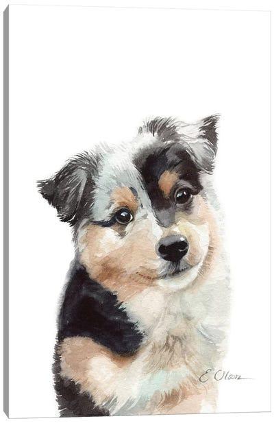 Australian Shepherd Puppy Canvas Art Print