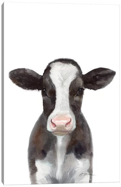 Holstein Calf Canvas Art Print