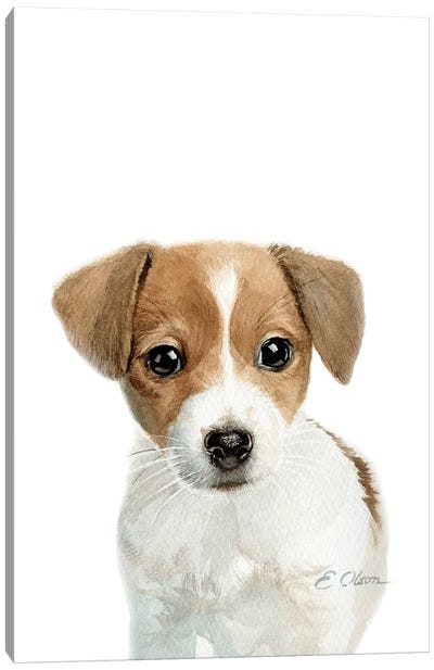 Jack Russell Terrier Puppy Canvas Art Print