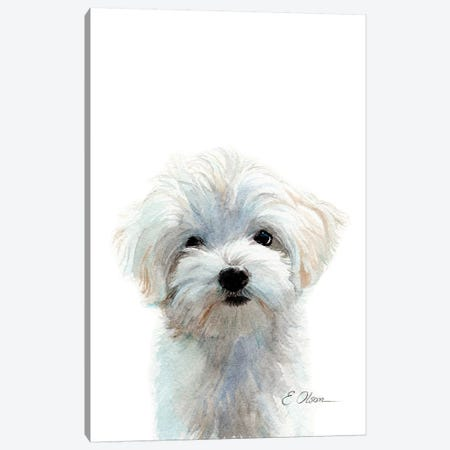 Maltese Puppy Canvas Print #WLU47} by Watercolor Luv Canvas Art Print