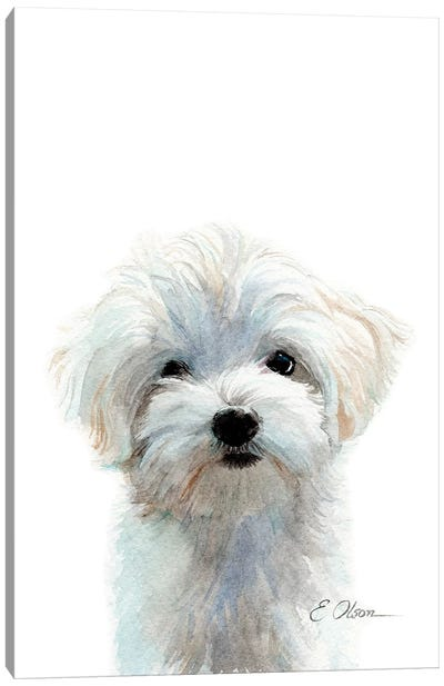 Maltese Puppy Canvas Art Print