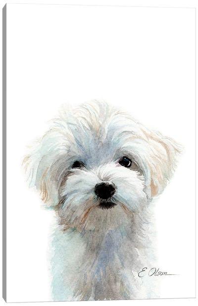 Maltese Puppy Canvas Art Print