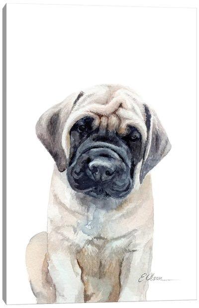 Mastiff Puppy Canvas Art Print