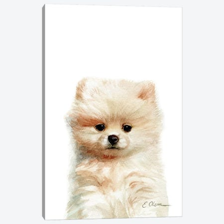 Pomeranian Puppy Canvas Print #WLU68} by Watercolor Luv Canvas Art