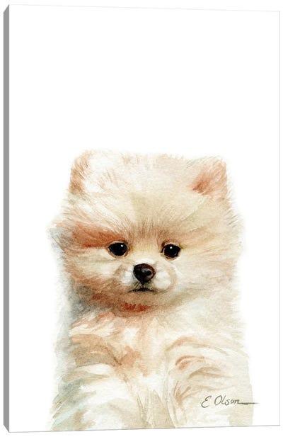 Pomeranian Puppy Canvas Art Print