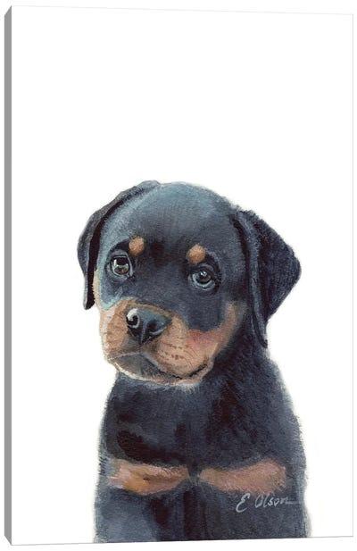 Rottweiler Puppy Canvas Art Print