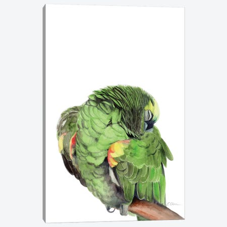 Sleeping Amazon Parrot Canvas Print #WLU72} by Watercolor Luv Art Print