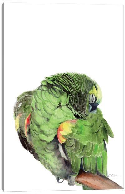 Sleeping Amazon Parrot Canvas Art Print