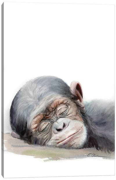 Sleeping Baby Chimpanzee Canvas Art Print