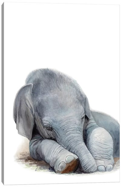 Sleeping Baby Elephant Canvas Art Print