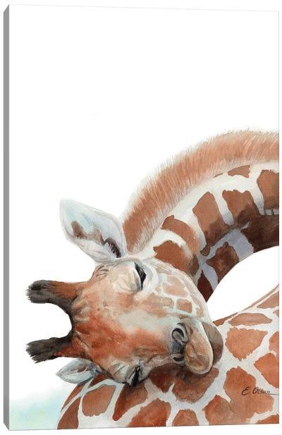 Sleeping Baby Giraffe Canvas Art Print