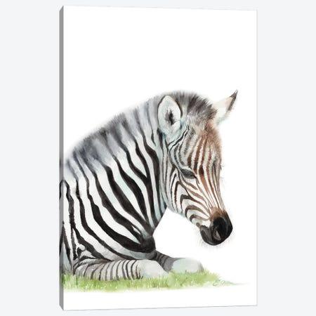 Sleeping Baby Zebra Canvas Print #WLU78} by Watercolor Luv Canvas Art Print