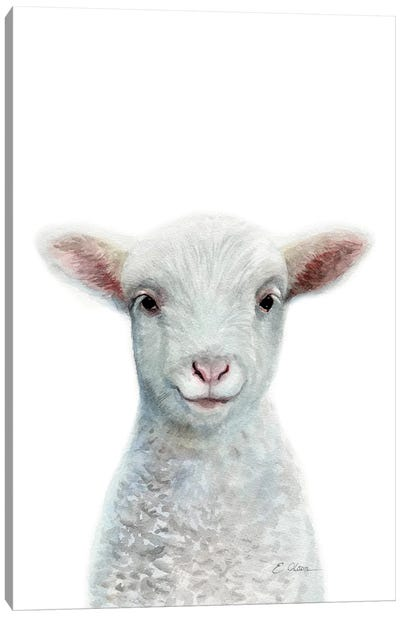 Baby Sheep Canvas Art Print