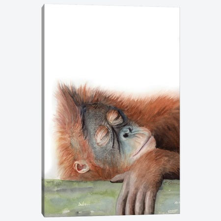 Sleeping Orangutan Canvas Print #WLU82} by Watercolor Luv Canvas Art