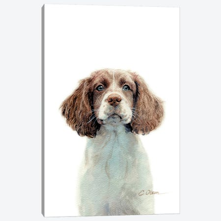 Springer Spaniel Puppy Canvas Print #WLU84} by Watercolor Luv Art Print