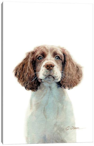 Springer Spaniel Puppy Canvas Art Print