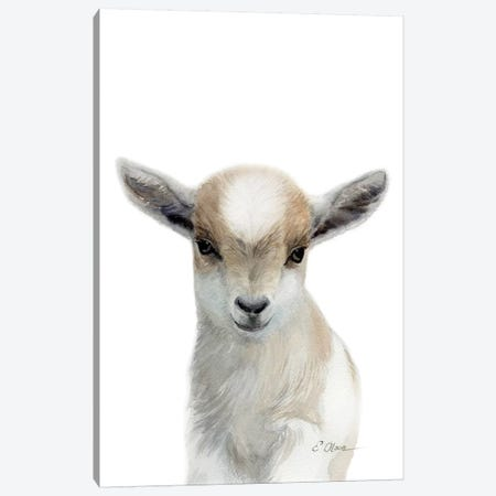 Tan & White Baby Goat Canvas Print #WLU85} by Watercolor Luv Art Print