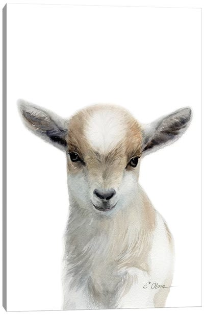 Tan & White Baby Goat Canvas Art Print