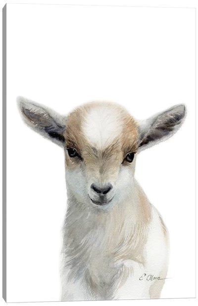 Tan & White Baby Goat Canvas Art Print