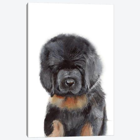 Tibetan Mastiff Puppy Canvas Print #WLU86} by Watercolor Luv Art Print