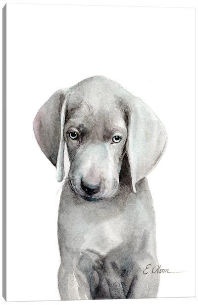 Weimaraner Puppy Canvas Art Print