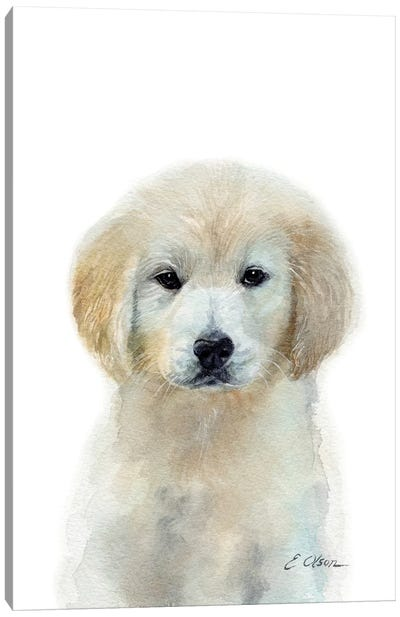 White Golden Retriever Puppy Canvas Art Print
