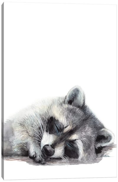 Woodland Sleeping Raccoon Canvas Art Print