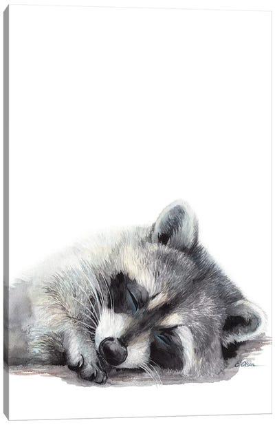 Woodland Sleeping Raccoon Canvas Art Print