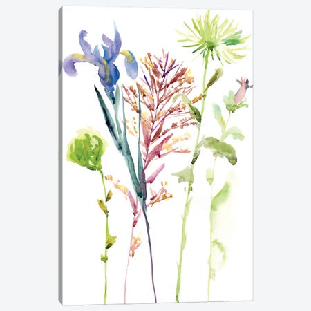 Watercolor Floral Study III Canvas Print #WNG104} by Melissa Wang Canvas Artwork