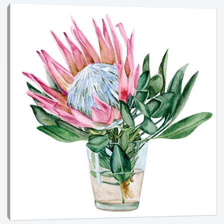 Awaken Protea II Canvas Print #WNG1068} by Melissa Wang Canvas Art