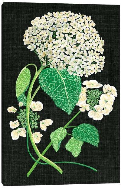 White Hydrangea Study II Canvas Art Print