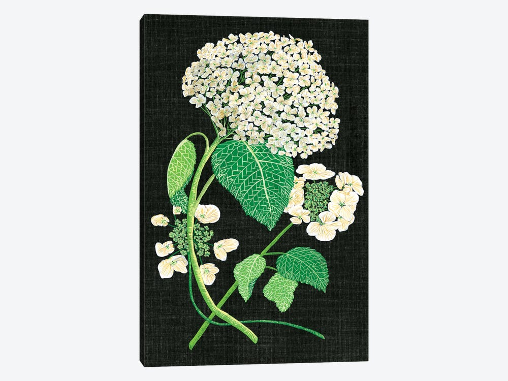 White Hydrangea Study II by Melissa Wang 1-piece Canvas Art Print