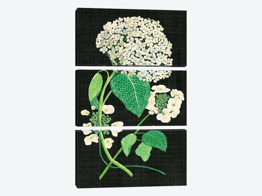 White Hydrangea Study II by Melissa Wang 3-piece Art Print