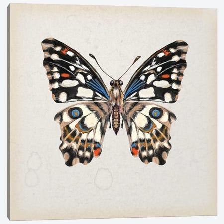 Butterfly Study II Canvas Print #WNG108} by Melissa Wang Canvas Art Print