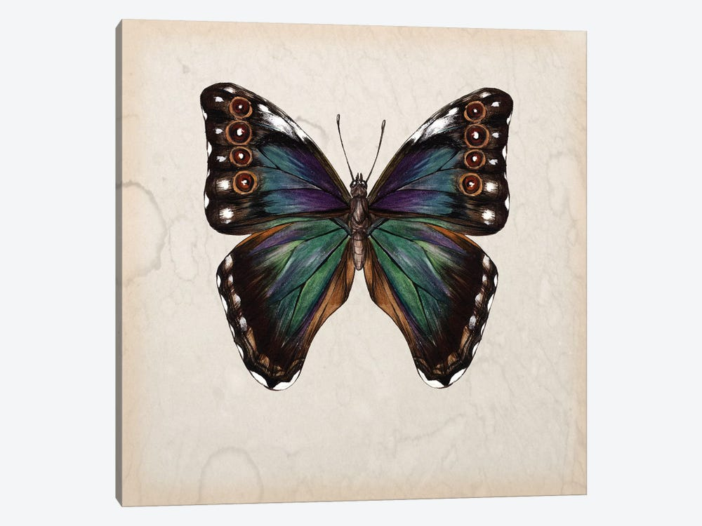 Butterfly Study III by Melissa Wang 1-piece Canvas Print
