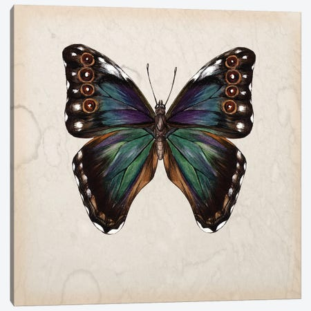 Butterfly Study III 3-Piece Canvas #WNG109} by Melissa Wang Canvas Print