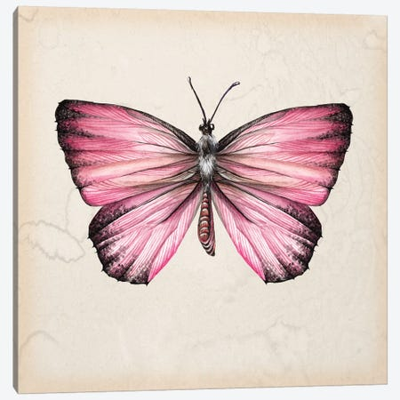Butterfly Study IV Canvas Print #WNG110} by Melissa Wang Canvas Wall Art