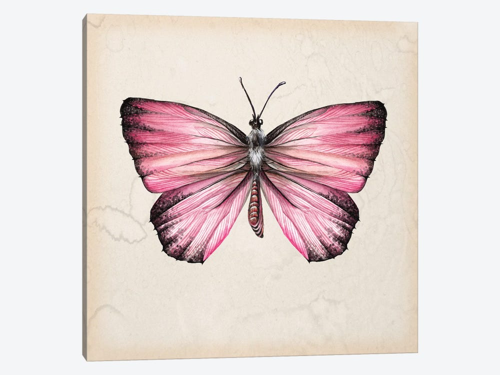 Butterfly Study IV by Melissa Wang 1-piece Canvas Print