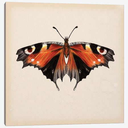 Butterfly Study V Canvas Print #WNG111} by Melissa Wang Canvas Artwork