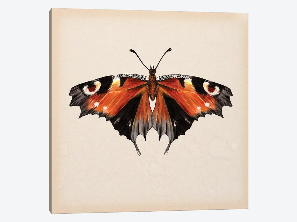 Butterfly Study V by Melissa Wang 1-piece Canvas Artwork