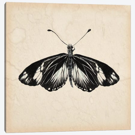 Butterfly Study VI Canvas Print #WNG112} by Melissa Wang Canvas Art